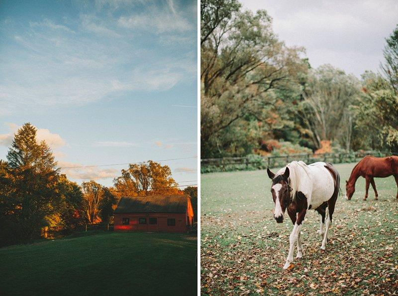 Tralee Farm Horses