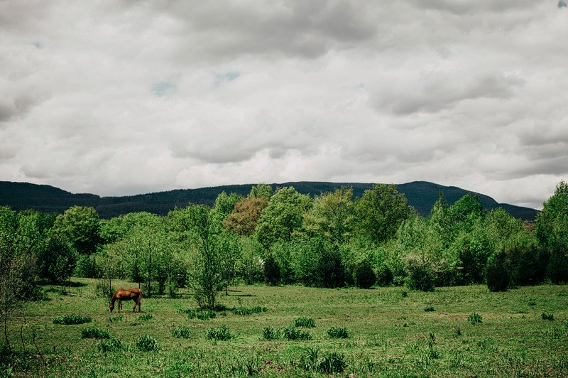 horse in the catskills