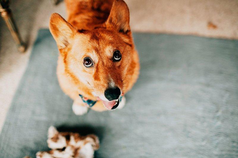 dog with bride getting ready catskills