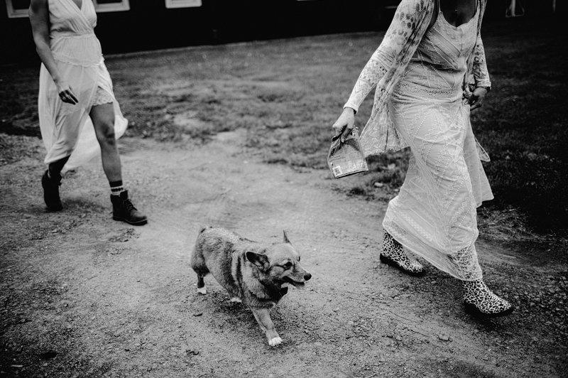 dog friendly wedding venue nyc