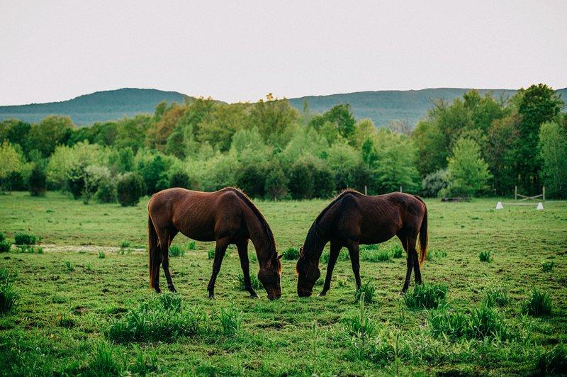 Catskills_Farm_Wedding_NY_Kaaterskill_083