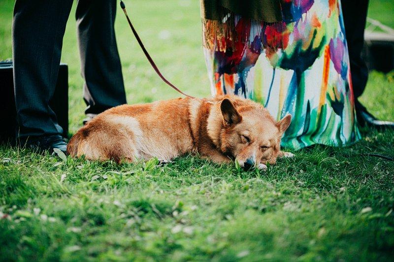 dog at wedding ceremony hudson valley