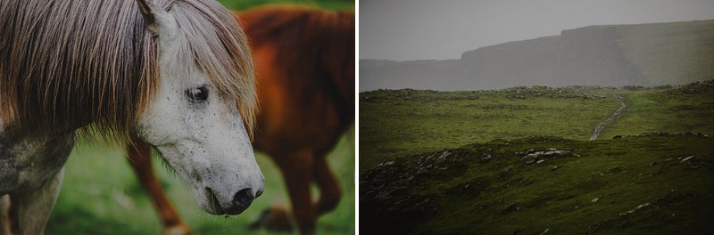 horses in iceland 2