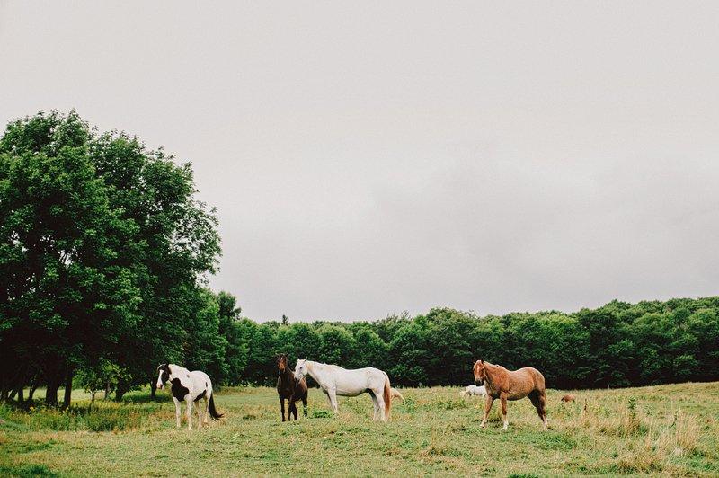 horses at stone tavern farm 1